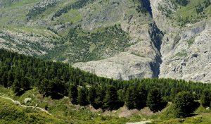 Aletschwald Forest VS, Switzerland