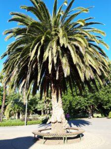 20191208_185309 - Neuseeland - Christchurch - Botanischer Garten -