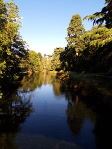 20191208_192041_new - Neuseeland - Christchurch - Botanischer Garten - Fluss Avon