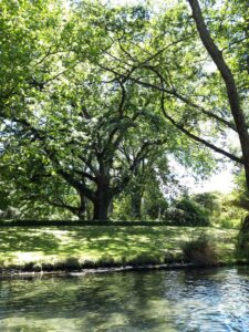 20191209_123829 - Neuseeland - Christchurch - Botanischer Garten - Europäische Eiche - Fluss Avon - Stocherkahn