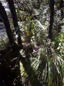 20191210_123539 - Neuseeland - TranzAlpine Bahn - Arthur's Pass - Fluss Bealy - Wasserfall - Devil's Punchbowl - Mountain Flax