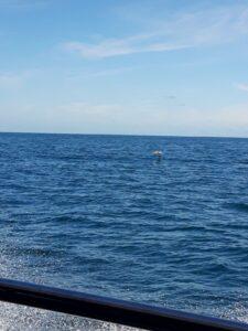 20191212_111505 - Neuseeland - Kaikoura - Pottwale beobachten - Albatros - Pazifik