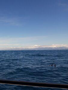 20191212_114219 (2) - Neuseeland - Kaikoura - Pottwale beobachten - Delphinen - Pazifik