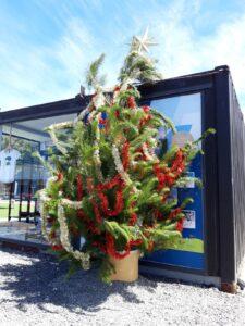 20191212_141945 - Neuseeland - Kaikoura - Weihnachtsbaum