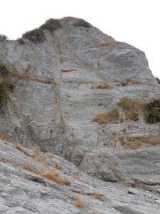 20191213_154301 - Neuseeland - Kaikoura - Pazifik - Point Kean - Küste - Fels - Strand