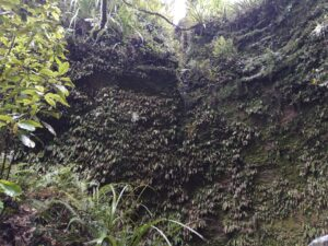 20191217_111254 - Neuseeland - Westcoast - Hokitika - glow worms