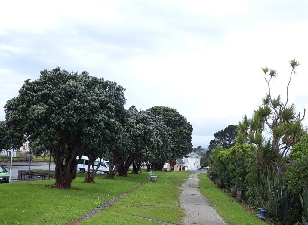 20191217_132908 (2) - Neuseeland - Westcoast - Hokitika - Neuseeländischer Weihnachtsbaum - New-Zealand Christmas tree - Pohutukawa tree, Metrosideros excelsa)