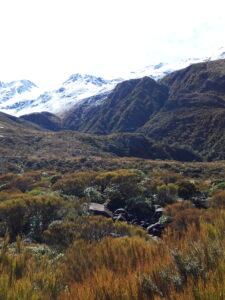 20191218_101836 - Neuseeland - Westcaost - Canterbury - Arthur's Pass - kleiner See - Mountain flax (Phormium colensoi)
