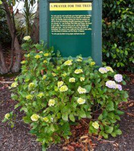 """20191219_101645 (2) - Neuseeland - Canterbury - Timaru - Botanischer Garten - """"Prayer for the trees"""""""