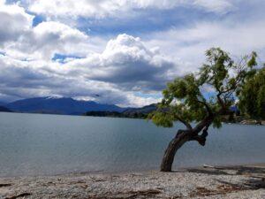 20191220_163231 - Neuseeland - Otago - Wanaka - Wanaka See - Wanaka Tree - Sonne und Wolken