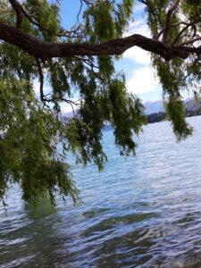20191221_124818 - Neuseeland - Otago - Wanaka - Lake Wanaka See - Weiden mit den Zweigen im Wasser