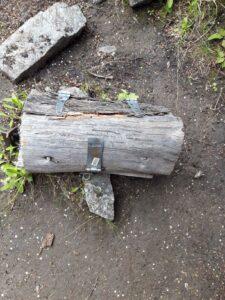 20191221_160833 - Neuseeland - Otago - Wanaka - Wanaka See - Insel Mou Waho - neuseeländischer Heuschrecken - Mountain Stone Weta (Hemideina maori)