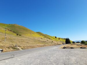 20191223_094442 - Neuseeland - Otago - Cromwell (NZ) - Lake Dunstan Stausee - 45. Breitengrad - südliche Hemisphäre - Scharfe Fetthenne (sedrum acre)