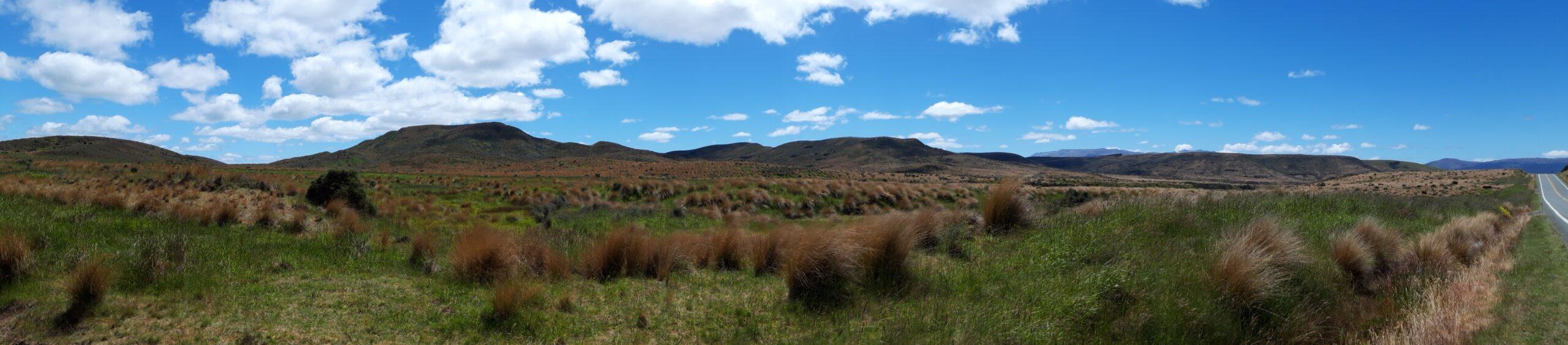 20191223_132856 - Neuseeland - Fiordland - Mossburn (NZ) - Te Anau (NZ) - Burwood Red Tussock Scientific Reserve - Red Tussock Gras (Chionochloa rubra)