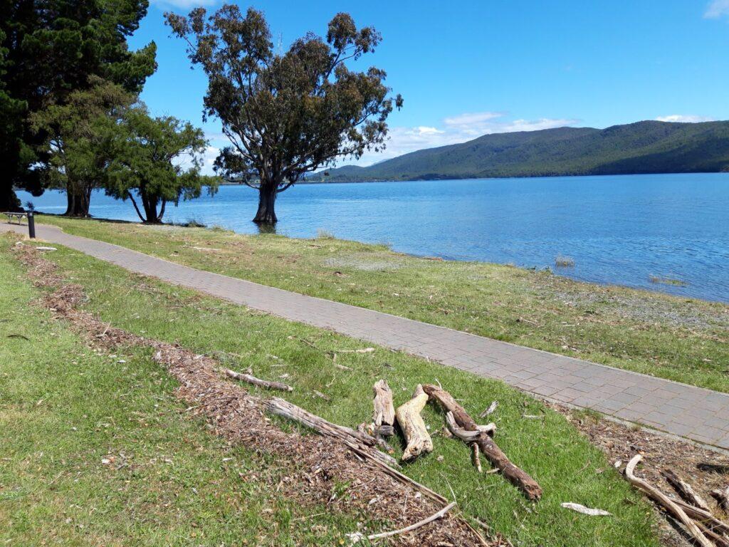 20191223_145715 - Neuseeland - Fiordland - Te Anau - Te Anau See - Hochwasser - Treibholz - Baum im Wasser