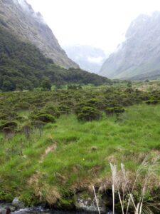 "20191225_102136 - Neuseeland - Fiordland - Te Anau Downs (NZ) - Eglinton Valley Tal - Golden star lily"" (Bulbinella gibbsii var. balanifera) - Maori onion"