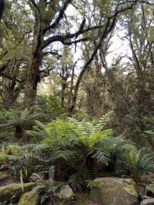 """20191225_104935 - Neuseeland - Fiordland - Te Anau (NZ) - Milford Sound - Cleddau Fluss - """"The Chasm"""" Schlucht - Farn"""