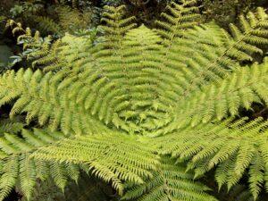 """20191225_105052 - Neuseeland - Fiordland - Te Anau (NZ) - Milford Sound - Cleddau Fluss - """"The Chasm"""" Schlucht - Farn"""