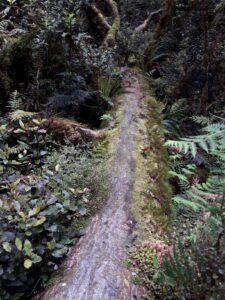 """20191225_105449 - Neuseeland - Fiordland - Te Anau (NZ) - Milford Sound - Cleddau Fluss - """"The Chasm"""" Schlucht"""