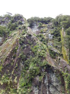 20191225_115729 - Neuseeland - Fiordland - Te Anau (NZ) - Milford Sound - karge Vegetation - Steilhang
