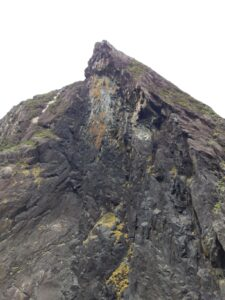 20191225_120012 - Neuseeland - Fiordland - Te Anau (NZ) - Milford Sound - karge Vegetation - Steilhang