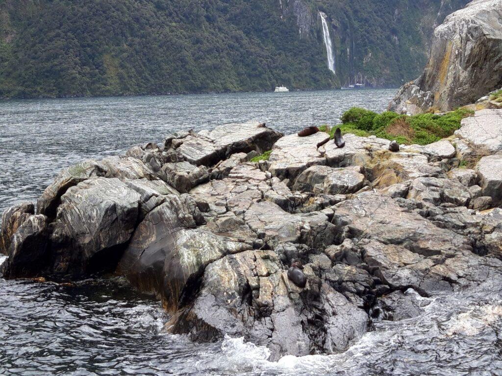20191225_120317 - Neuseeland - Fiordland - Te Anau (NZ) - Milford Sound - Copper Point - neuseeländische Seebär (Arctocephalus foresti) - Bowen Falls - Wasserfall