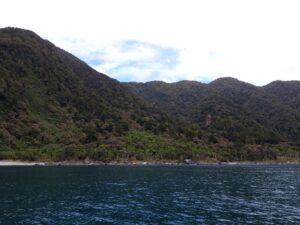 20191225_121927 - Neuseeland - Fiordland - Te Anau (NZ) - Milford Sound - Tasman Sea Meer - Wald