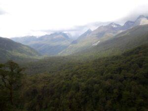 20191225_151844 - Neuseeland - Fiordland - Te Anau Downs (NZ) - Eglinton Valley Tal - Wald