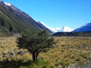 20191228_094056 - Neuseeland - Canterbury (NZ) - Mount Cook Village (NZ) - Tasman Valley Tal -Mt. Graham - schneebedeckter Berggipfel - blauer Himmel